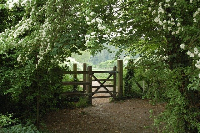 Picture of a gate.