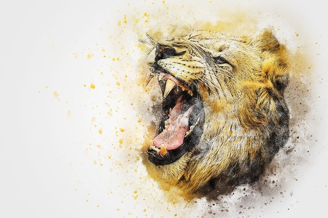 Picture of a lion roaring