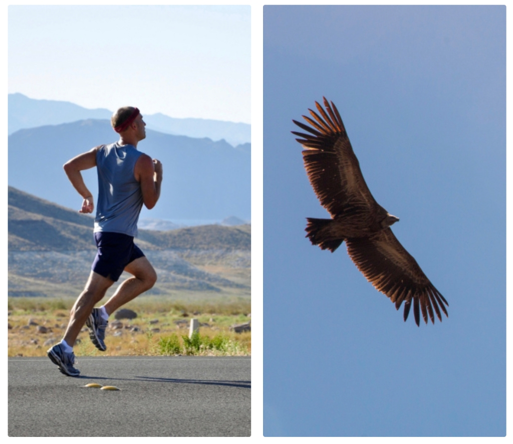 Picture of a man running and an eagle  flying.