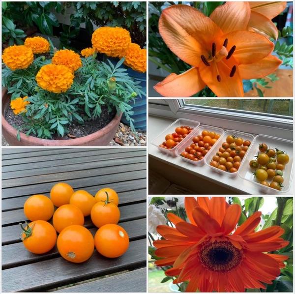 Photos of marigolds, orange flowers, oranges and orange tomatoes.