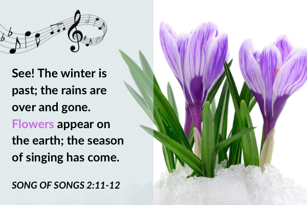 Picture of crocuses in the snow with text: see! The winter is past; the rains are over and gone. Flowers appear on the earth; the season of singing has come. Song of Songs 2:11-12