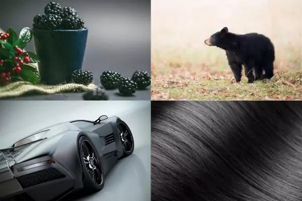 Picture of blackberries, black bear, black car, black hair