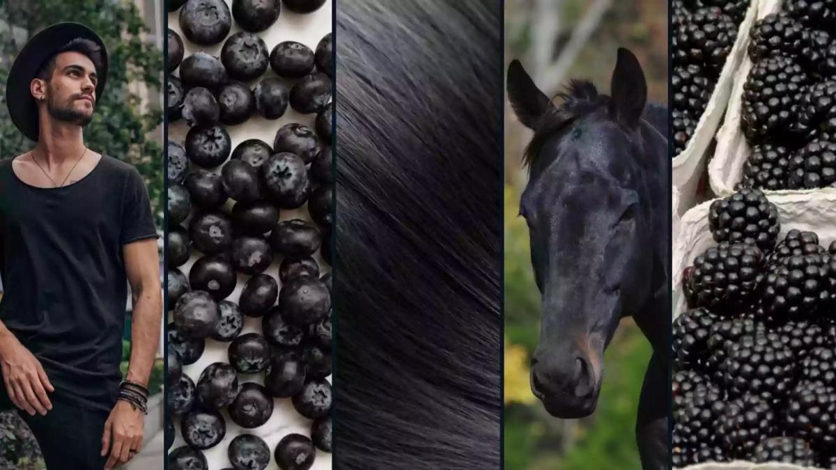 Pictures of a man dressed in black, black berries, black hair, black horse, blackberries