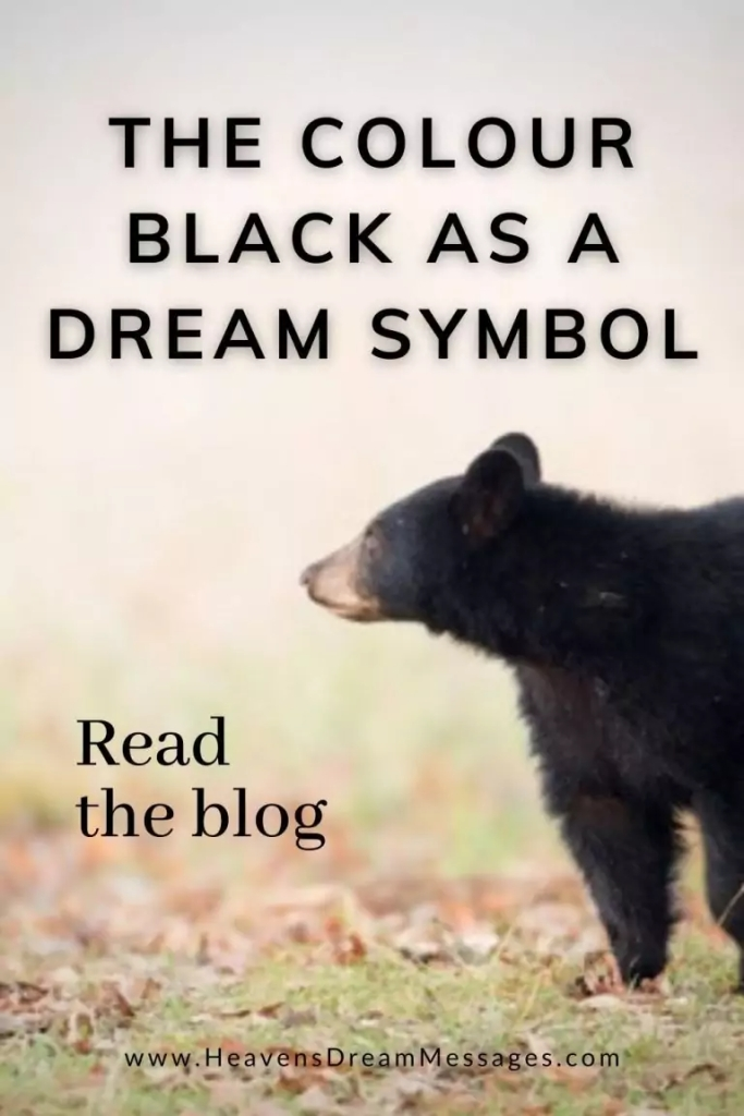 Picture of black bear with text: colour black as a dream symbols - read the blog