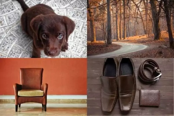 Picture of a puppy, autumn trees, brown chair and brown shoes